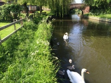 The canal with local wildlife